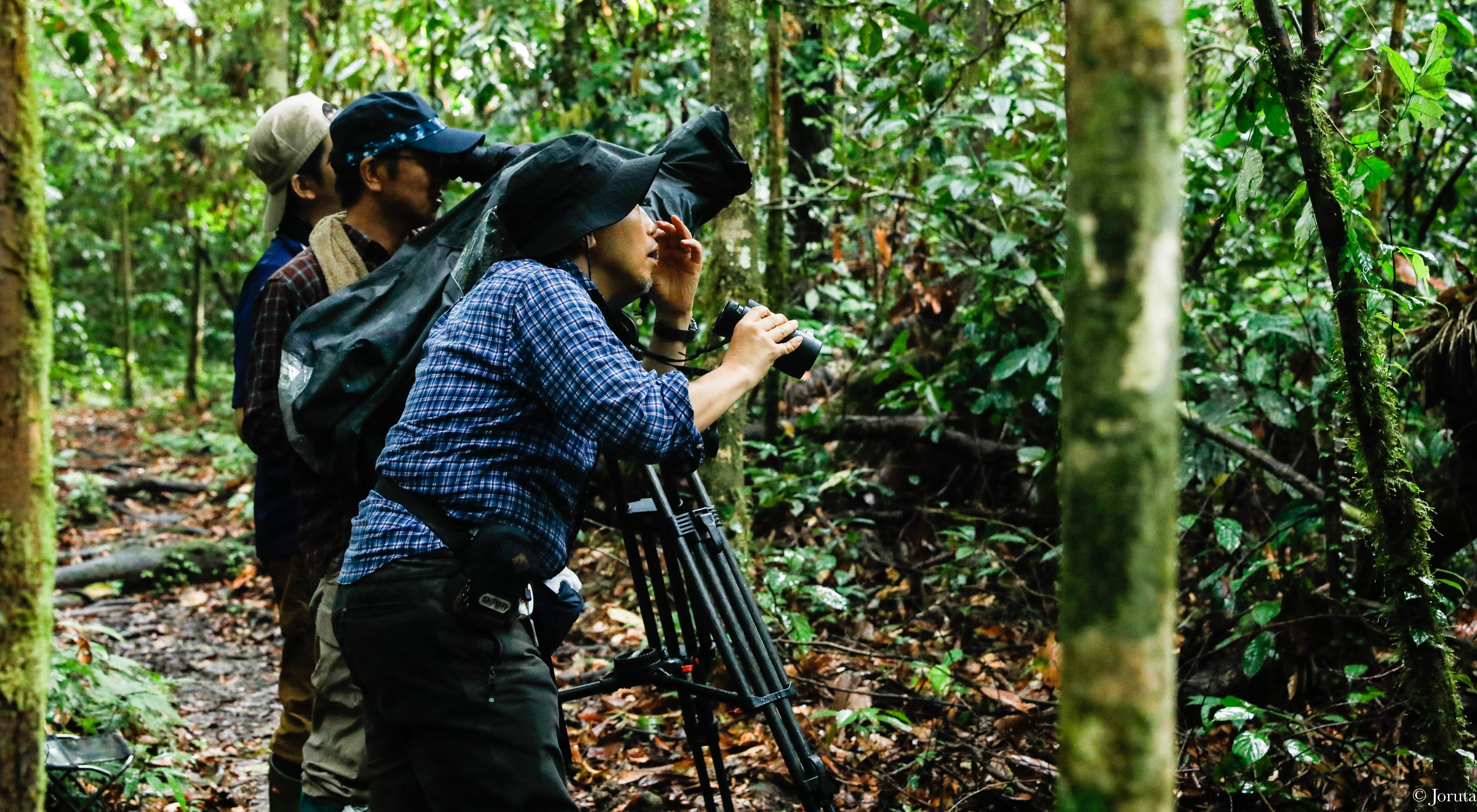 Borneo Trails